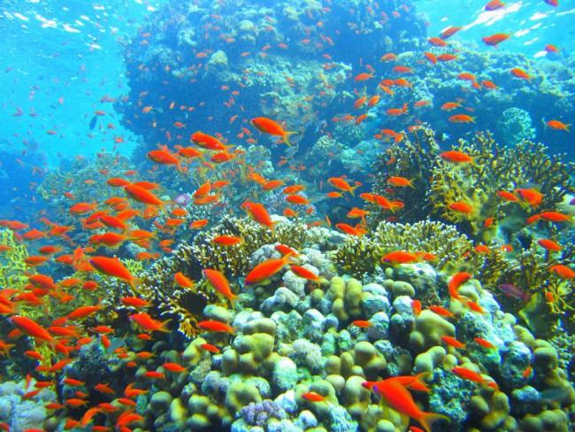 Korallzatony_Belize_Aquamagazin