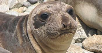 elephant-seal-release-wod