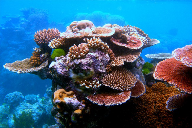 greatbarrierreef3