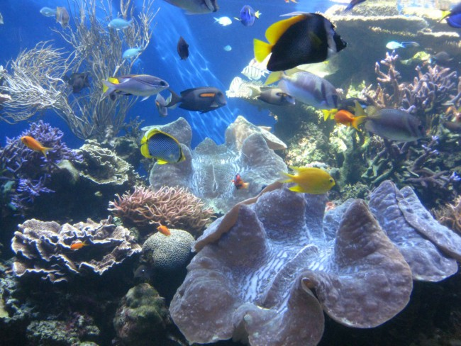 Hawaii-Waikiki-Aquarium