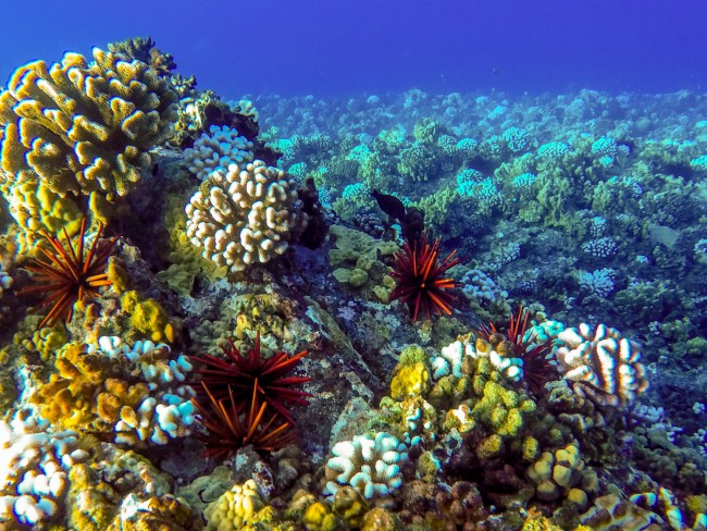 Snorkel-Molokini-Crater-in-Maui-with-Redline-Tours